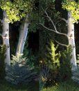 treegang-spotlights_1